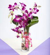 Bunch of purple orchids