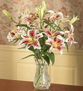 Bunch of stargazer oriental lilies