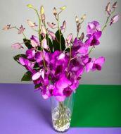 Mystical orchids in a vase